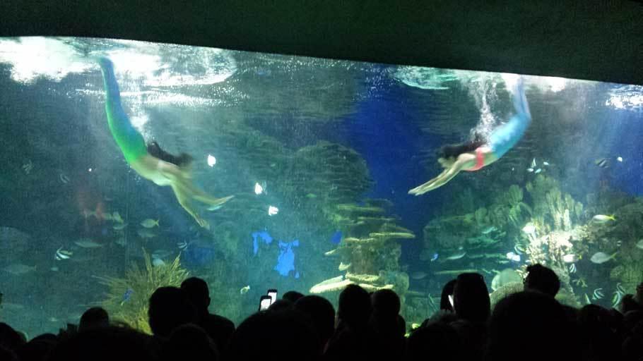 Mermaid show at the aquarium
