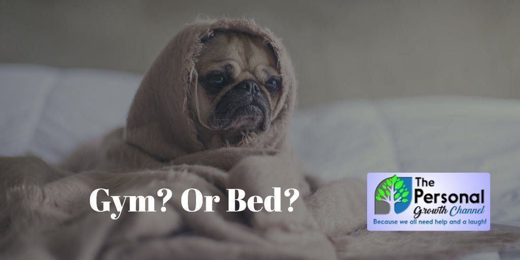 Puppy snuggled up in bed - Go to the gym or stay in bed?