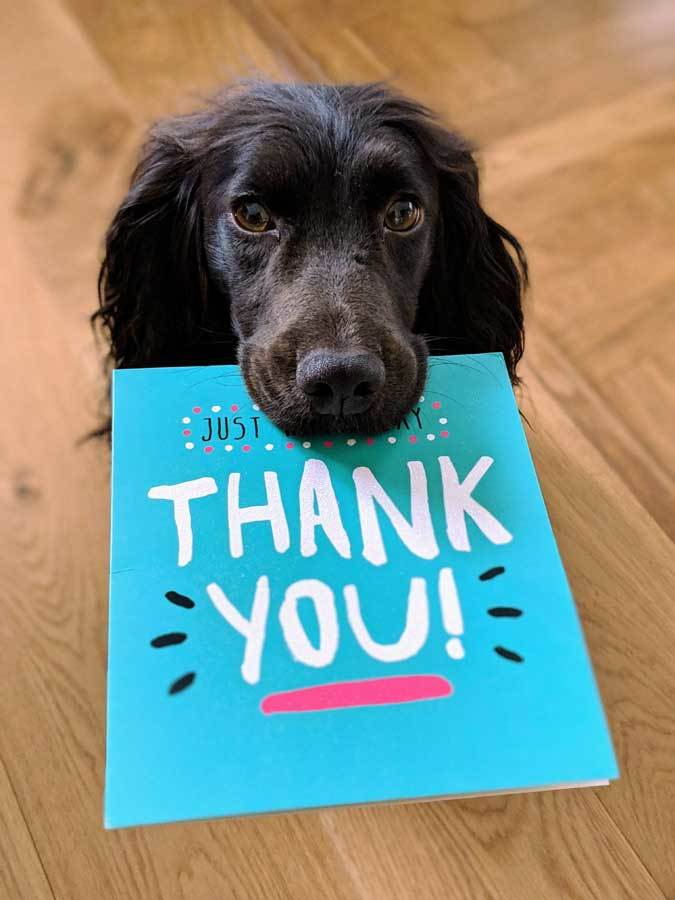 Dog holding thank you card - thanking employees can go a long ways towards growing your business.