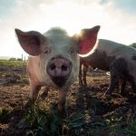 Never Wrestle With Pigs: How to Deal With Bullies and Trolls