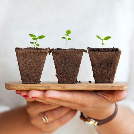 Starting a business is like starting a garden. Picture of seedlings.